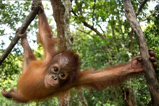 2 Days 1 Night Jungle Trek - Bukit...