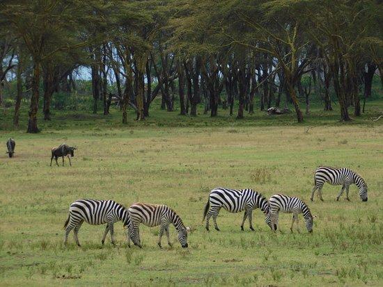 Sanctuary Horseback Safaris