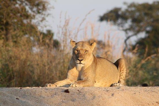 Sam safari & tours