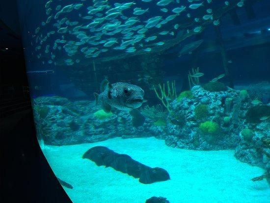 Texas State Aquarium (Corpus Christi) - All You Need to ...