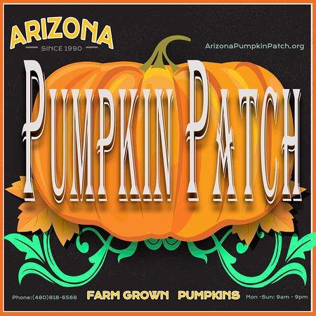 Chandler, AZ: Best Pumpkin Patch