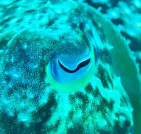 Marovo, Salomonøyene: Eye spy