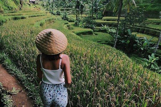 Det bästa av Ubud: Natur, tempel ...