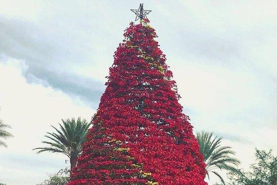 写真ケレタロのマジッククリスマスツアー枚
