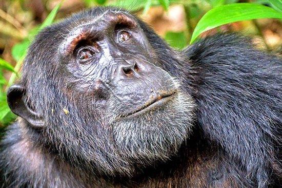 Kigoma ภาพถ่าย
