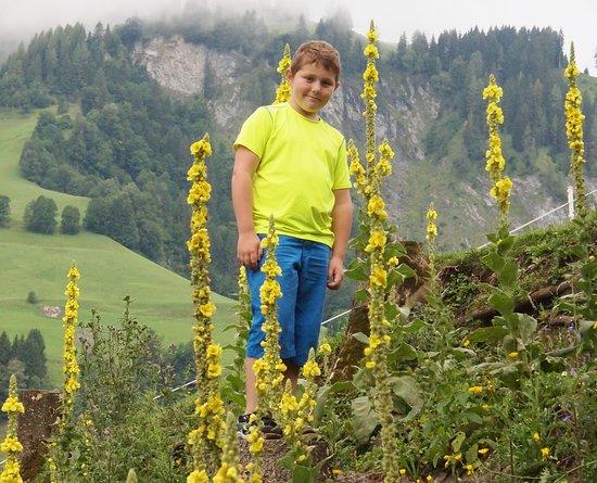 Goldegg, Austria: Kräuterwanderung