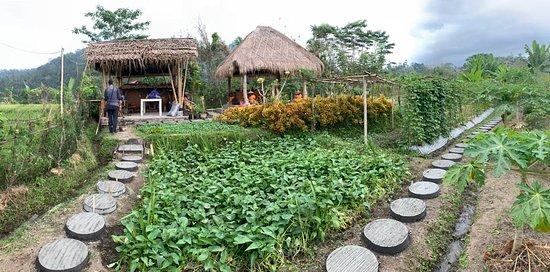 Anandinii Organic Garden & Kitchen