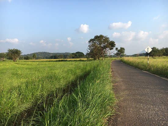 Galewela, Sri Lanka: farmer's village  there are many cultivations