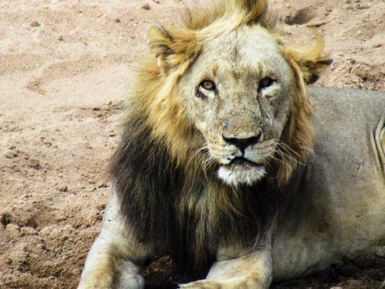 Kitawa Tours and Safaris