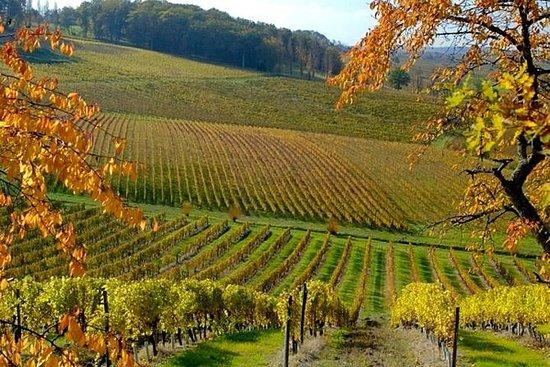 EXPLOREO在贝尔热拉克地区的私人葡萄酒之旅