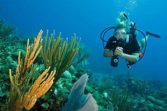 Coral Island met Under Sea Walking of ...