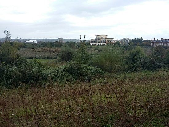 Cardiff Bay Wetland Reserve