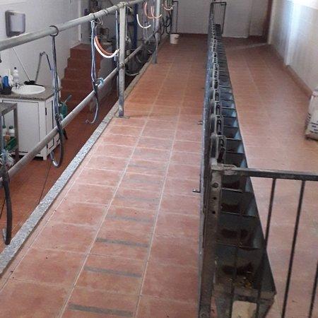 Ajuy, Španielsko: Goat Farm