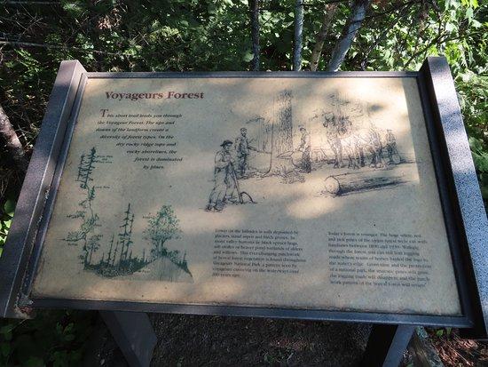 Voyageurs Forest Overlook