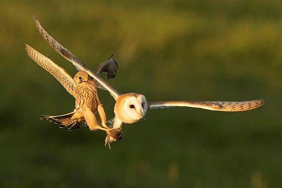 英国观鸟经验