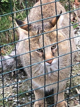 Birthday Treat! Big cats & more