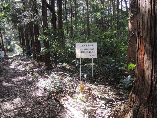 Tsuruma Shizen no Mori