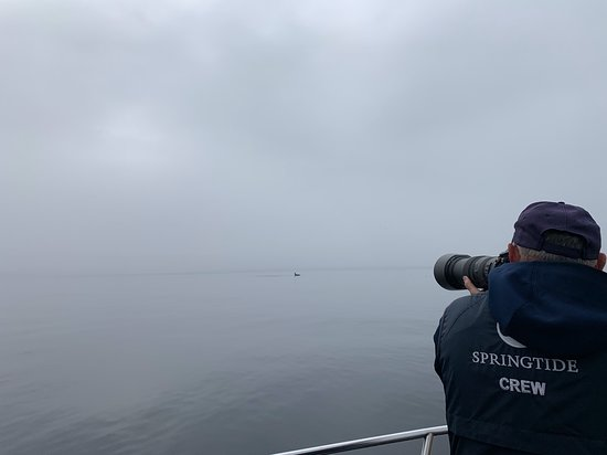 Victoria Whale Watch Tour: On board photographer Yves identifying whether this is a resident or transient orca