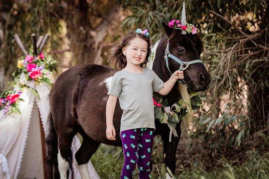 Prancing Pony Farm: Unicorn Photo Shoots