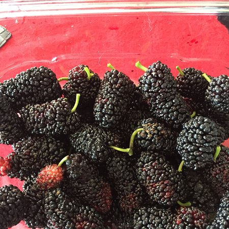 Dalyellup, Australia: Home grown mulberry bush 😋