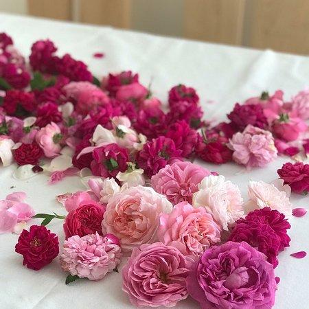 Bosentino, Italia: Agritur Maso Flonkeri#visitTrentino# rose# madebyme#агриусадьба Мазо Флонкери#Розы# сиропы# ввренья#