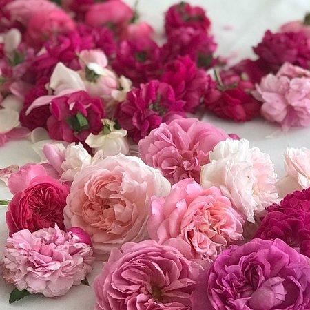 Bosentino, Italia: Rose