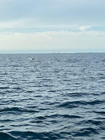 观赏海豚是在海豚的自然环境中观察海豚照片
