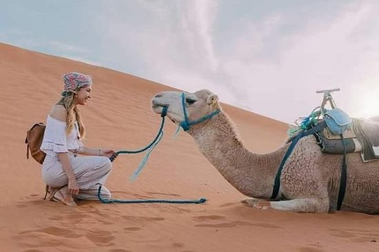 8 días 7 noches en el desierto desde...
