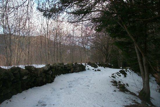 Sentiero sopra Canevare, gennaio 2019