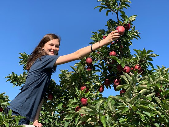 Cherry Hill Orchard