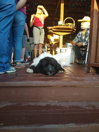 Basehor, KS: Many people visit the winery for their friendly dogs. This isn't a rug, it's Cooper!