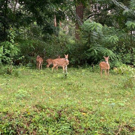 Periya, India: Wayanad wildlife ....Hi all if u need any help in Wayanad Please contact me +919562248808