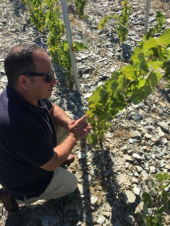 """Need a wine tour guide while in Douro Valley? """"Jorge Barefoot"""" is your guide!"""