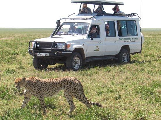 Nature's Land Safaris & Rentals Ltd