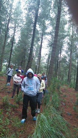 Cajamarca Region, Peru: GRANJA PORCON CAMINANDO POR EL BOSQUE.