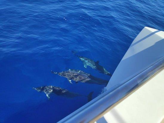 Wonderful boat, saw dolphins