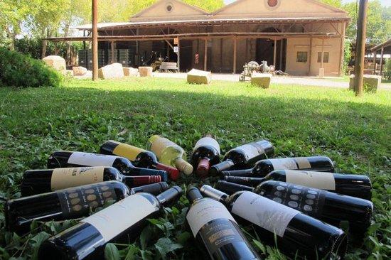 Vinomio Wine Tours