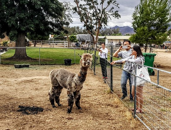 Diamond Valley Alpacas
