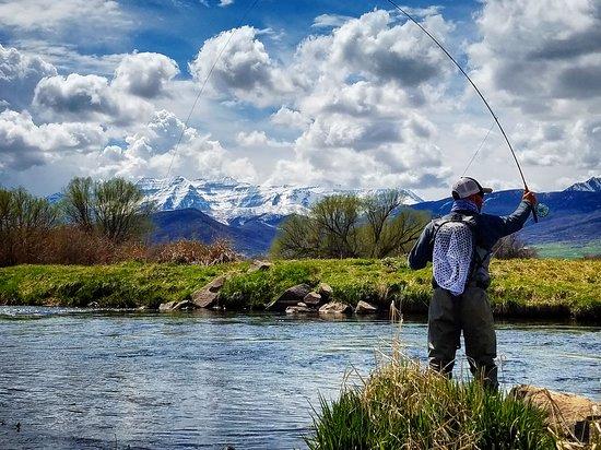 Mayfly Fishing