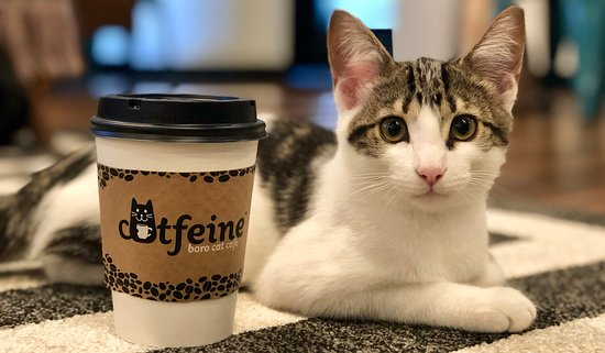 Catfeine Cat Cafe