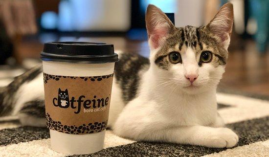 Catfeine Cat Cafe