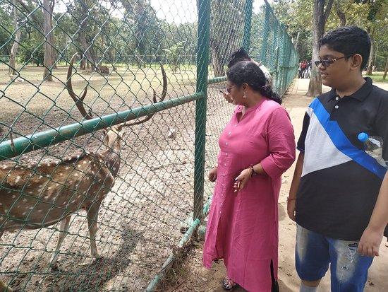 Nisargadhama Exotic Bird Park