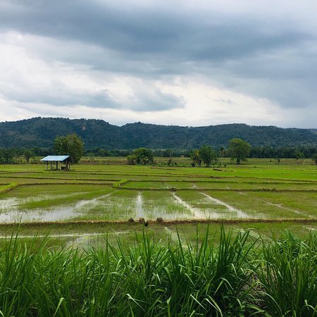 Balangoda, Srí Lanka: paddy fields with class of mountain