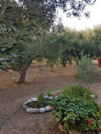 Althaea  Anatoli  Très agréable moment passé avec Stephanos Passionné par les plantes médicinales cretoise ..