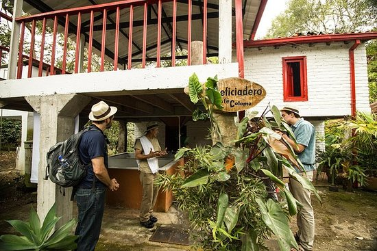 Coffee Farm experience Coloma, from...