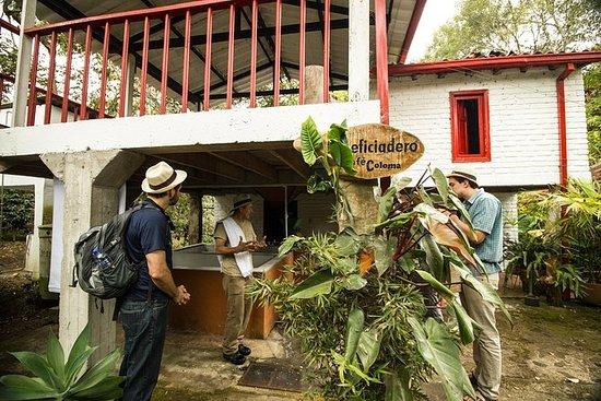 Coffee Farm erfaring Coloma, fra...