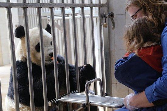 都江堰卧龙熊猫之旅选择熊猫门将体验