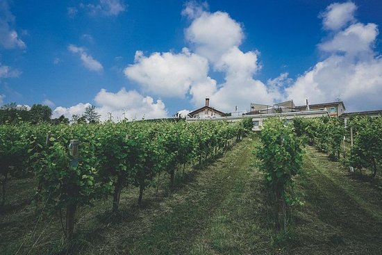 Sparkling Wine-tasting and Countryside Tour from Milan: Sparkling Wine Tour from Milan