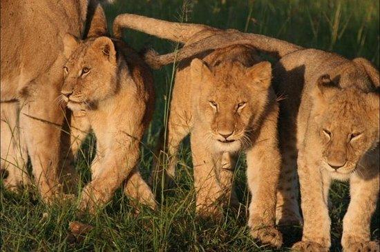 12 dager Kenya Explorer Safari