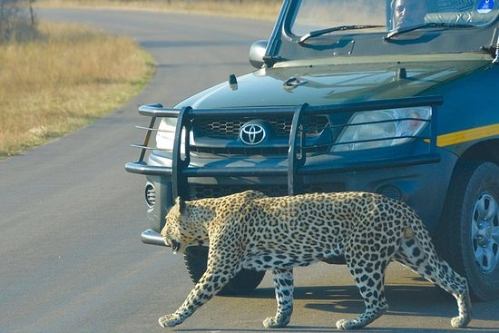 3 días Kruger Park Safari - Camping...